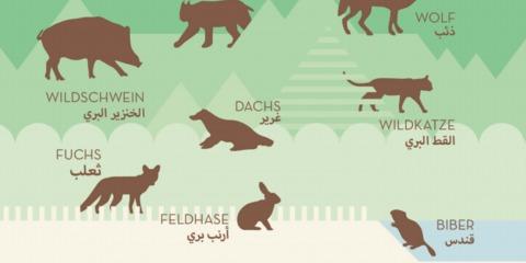 DaF DaZ Kärtchen / Tabelle 25 Infografiken über Deutschland