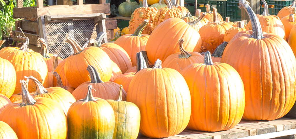 DaF- / DaZ-Materialien Herbst, Halloween, Laternenumzug und St. Marting